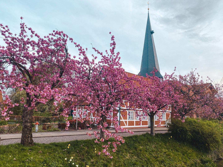 Cherry blossom in Jork Altes Land Hamburg