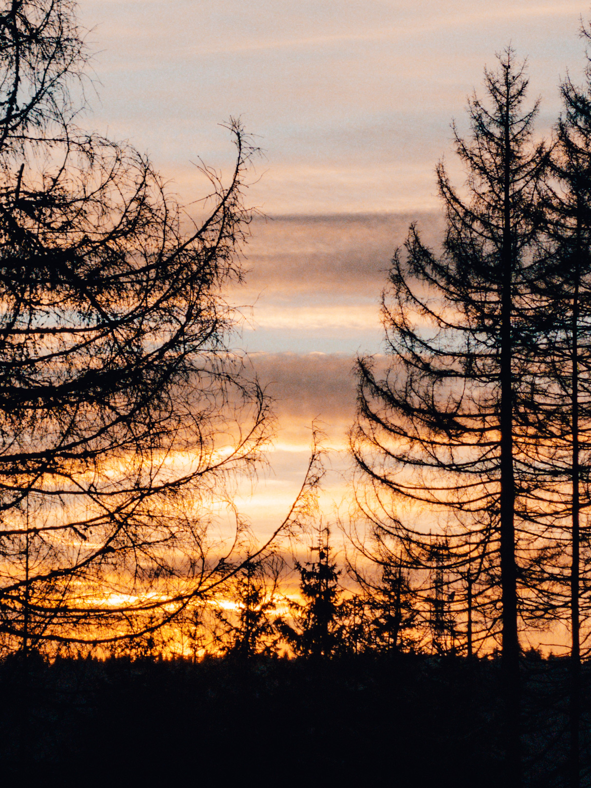 Sunset behind the trees in the Harz Mountains